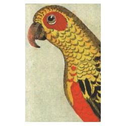 "Carte postale ""perroquet"""