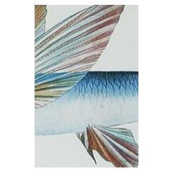 """Cadre, """"Hawaien fish"""""""