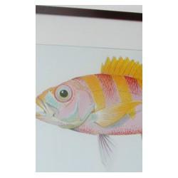 "Cadre ""Hawaien fish Ulaula"""