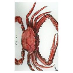 Plat à motif de crabes