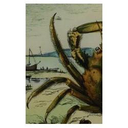 "Plat ""crabe"""