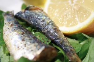 sardines citron